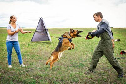 Дрессировка собак в Уфе. Защитная работа