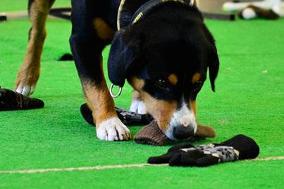 Дрессировка собак в Уфе. Поисковая работа