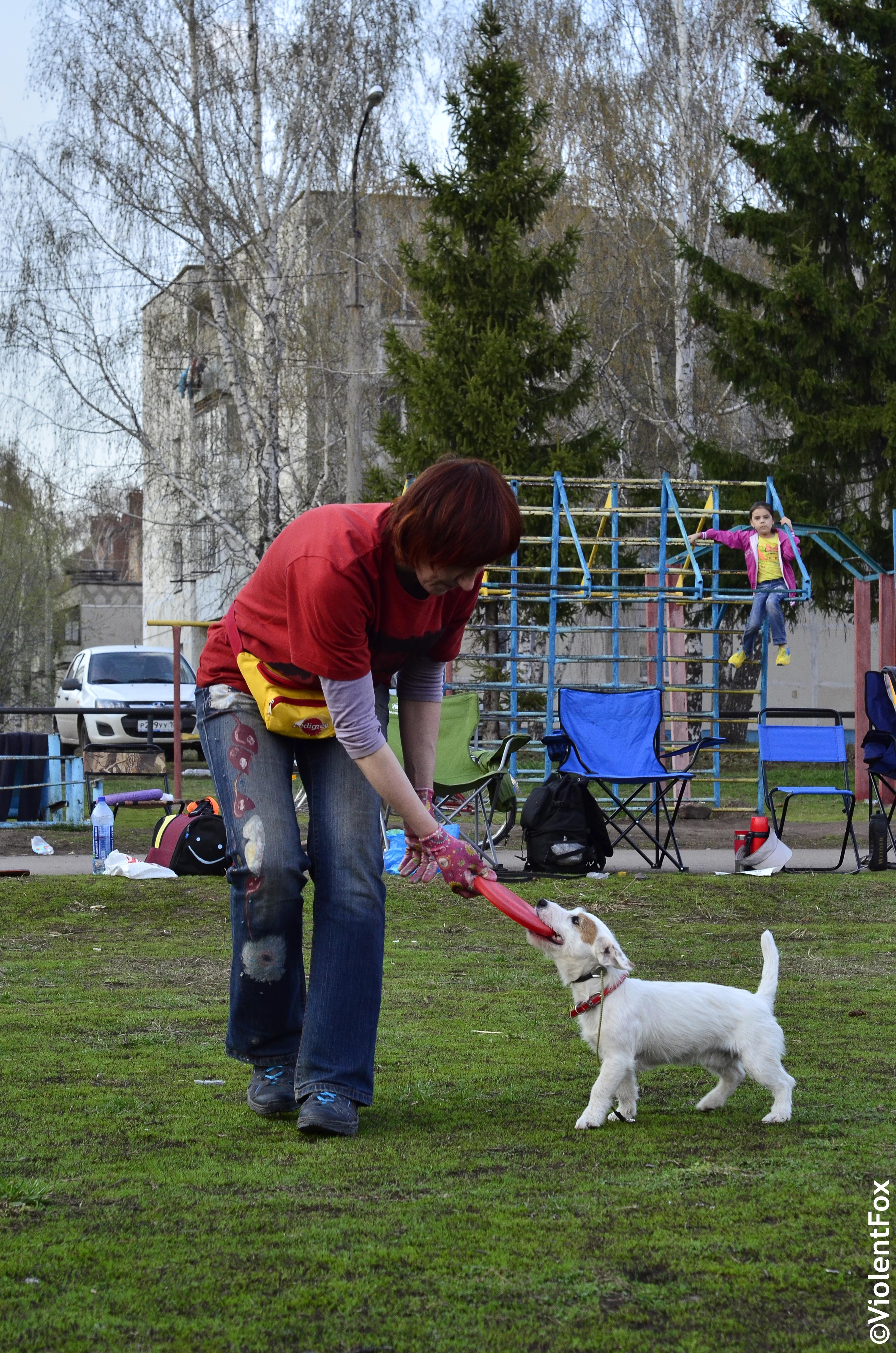 дрессировка немецкой овчарки инструкцияетод ивана балабанова