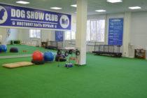 Зал для занятий DOG SHOW CLUB