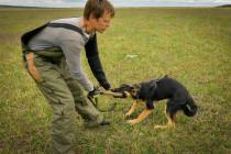 Обучение защите всегда начинается с игры. Немецкая овчарка ЗАЙКА, 4 мес.