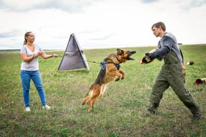 Дрессировка собак в Уфе. Защитная служба