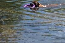 Что может быть лучше, чем купание в реке в жаркий летний день?  Малинуа ЗВЕРОБОЙ.