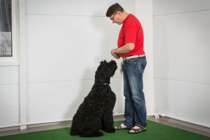 Центр дрессировки Dog Show Club. Общий курс дрессировки
