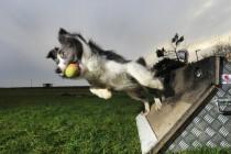 Спорт с собакой. Флайбол