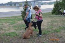 Джая и Мэллой учатся не обращать внимания на других собак.