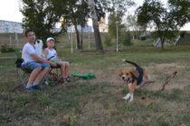 команде  'ко мне!' Кори со всех ног бежит к своей хозяйке, не обращая внимания ни на других собак, ни на юных зрителей.