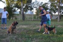 Екатерина и Кори отрабатывают движение рядом в присутствии раздражителя - Джаи.