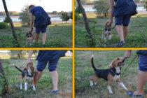 Следование за рукой - базовый навык. Но и о нем полезно время-от-времени вспомнить, особенно, если учите собаку новоой команде.