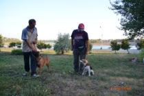 Пока Ашот и Джая работают над движением рядом, Андрей и бигль Герда тренируют выдержку.