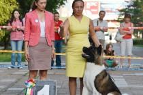 Всероссийская выставка собак всех пород г. Уфа
