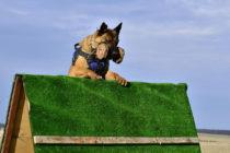 Разминка спортивной собаки