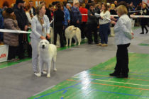 Выставка собак в Магнитогорске
