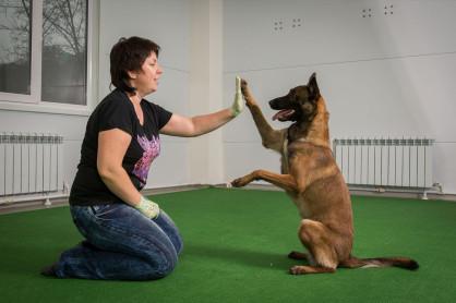 Цирковая дрессировка собак. Dog Show Club