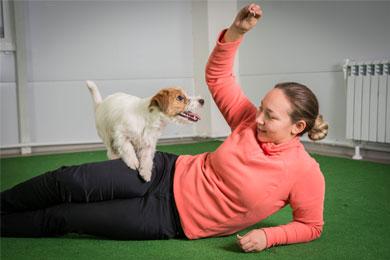 Dog Show Club - дрессировка щенка