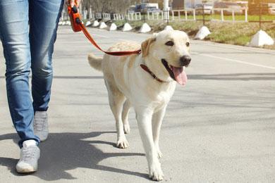 Дрессировка собак. Бытовое послушание