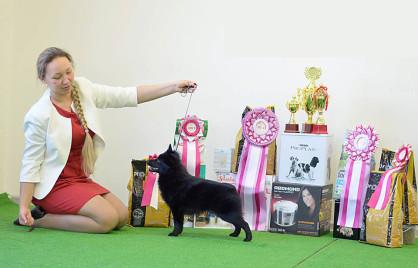 Центр дрессировки Dog Show Club
